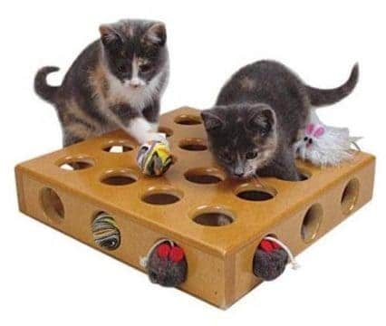 Activity toys help decrease risk of pet obesity