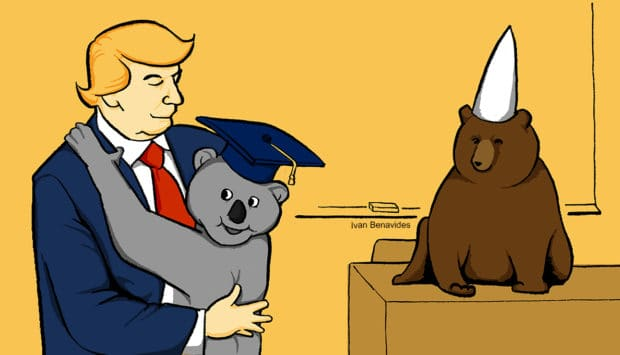 Donald Trump hugs a koala bear from Australia as he considers their student loan solution (illustrated)