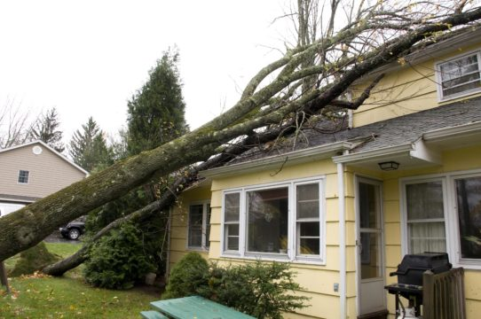 Tree fallen over on home