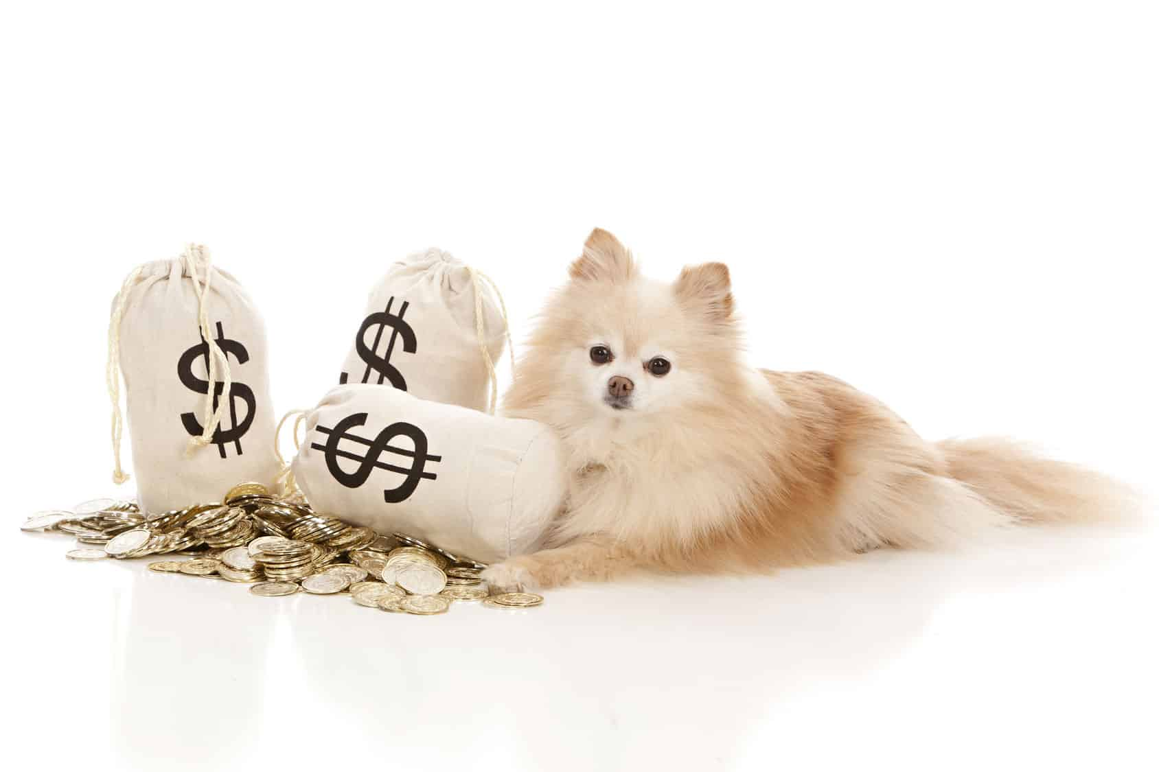 10 Ways to save money on pet expenses.